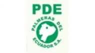creative palmeras-del-ecuador