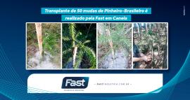 Transplante de 50 mudas de Pinheiro-Brasileiro é realizado pela Fast em Canela